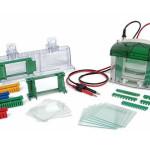 Gel Electrophoresis Apparatus